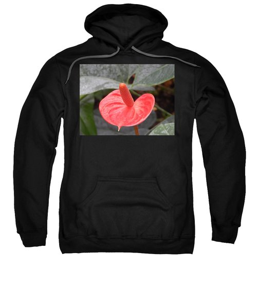 Botanical Garden Plants And Flowers Sweatshirt