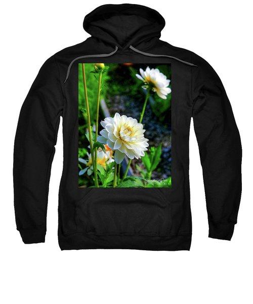 Chrysanthemum In Bloom Sweatshirt