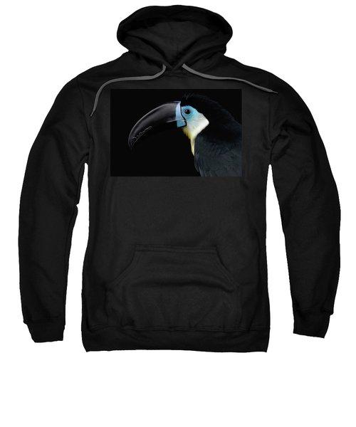 Close-up Channel-billed Toucan, Ramphastos Vitellinus, Isolated On Black Sweatshirt