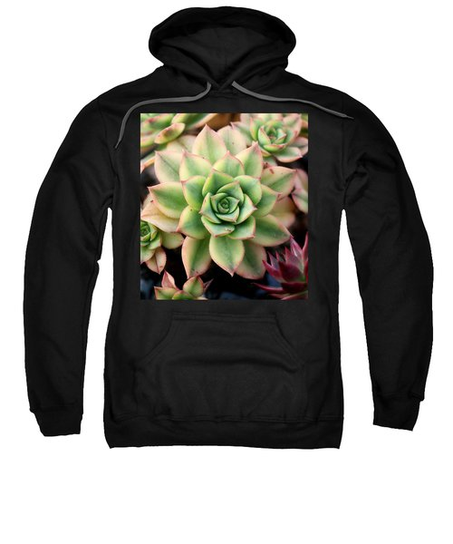 Cute Succulent Sweatshirt