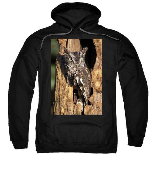 Eastern Screech Owl 92515 Sweatshirt