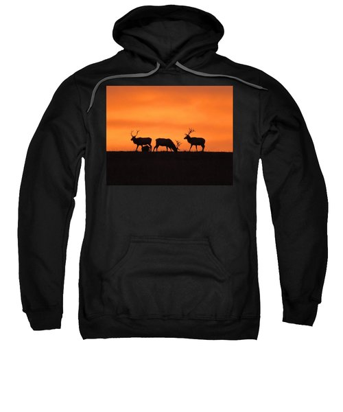 Elk In The Morning Light Sweatshirt