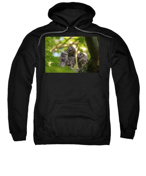 Feeding The Owlets Sweatshirt