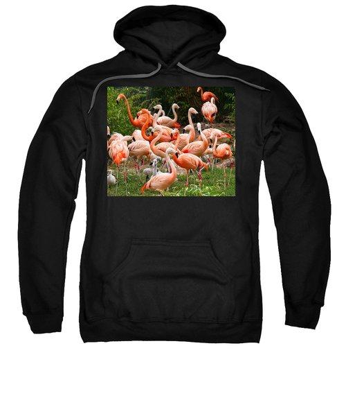 Flamingos Outdoors Sweatshirt