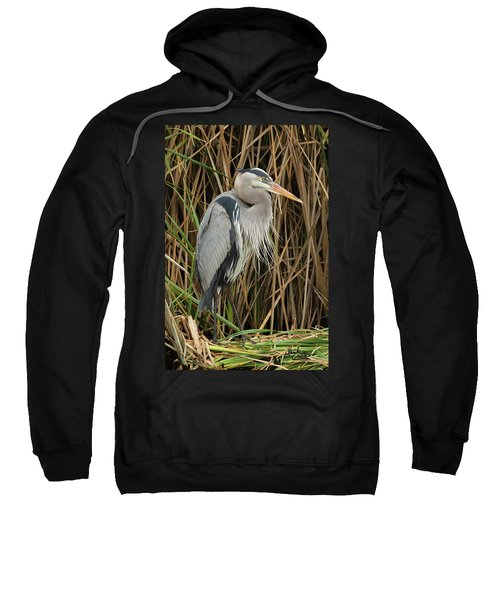 Great Blue Heron On Padre Island Sweatshirt
