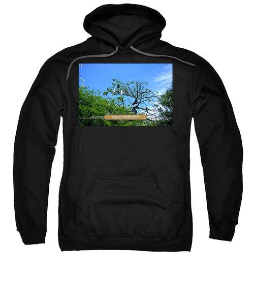 Ibis Risen - Virgin Nature Series Sweatshirt