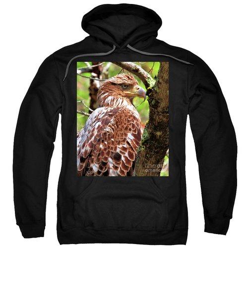 Immature Eagle Sweatshirt