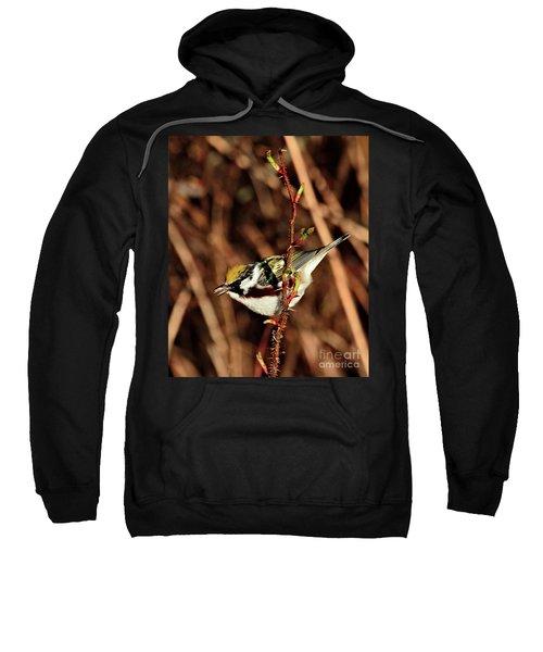 Perky Little Warbler Sweatshirt