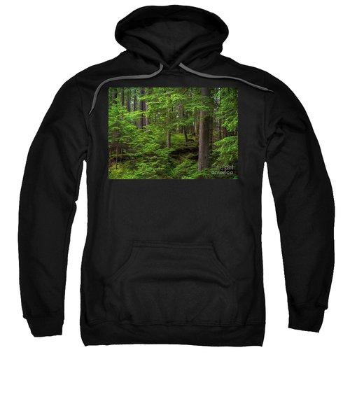 Quiet Forest Layers Sweatshirt