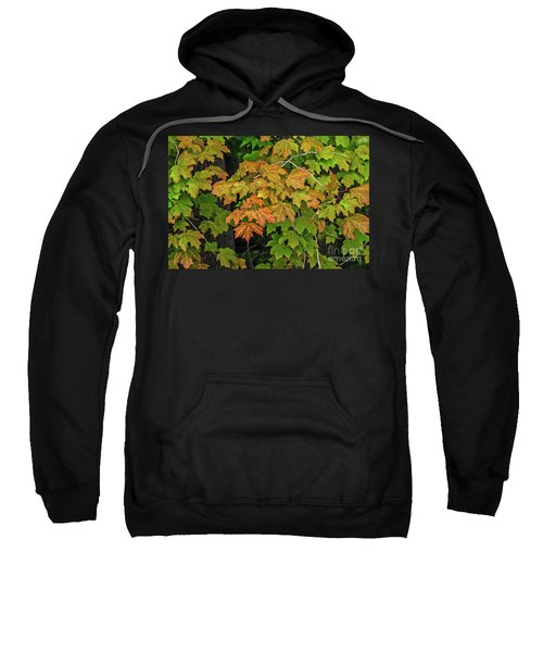 Various Stages Of Fall Color On Maple Leaves Sweatshirt
