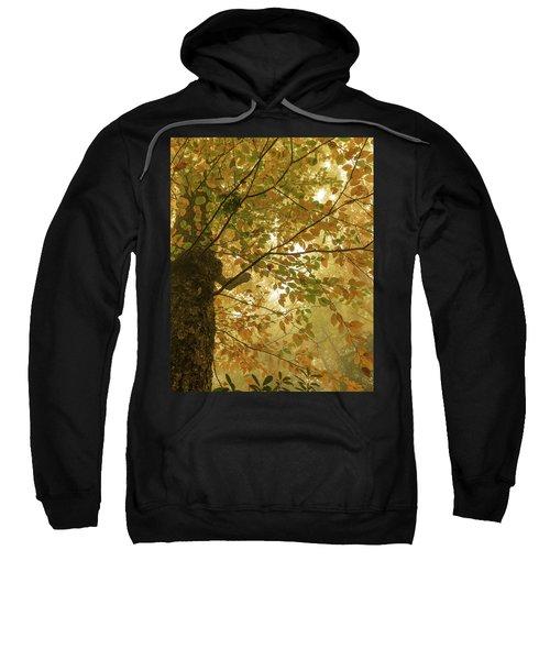 Yellow Fall Leaves - Blue Ridge Parkway Sweatshirt