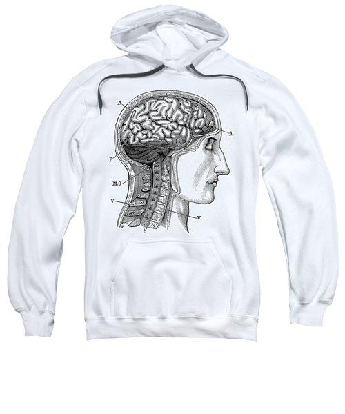 Anatomy: Brain Sweatshirt