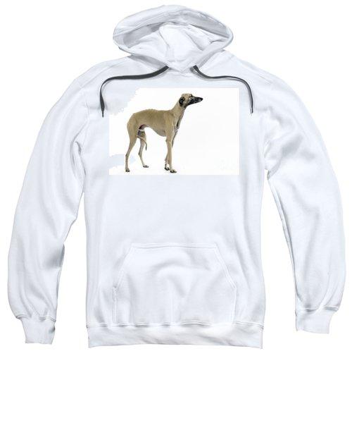 Saluki Dog Sweatshirt
