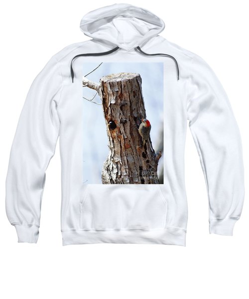 Woodpecker And Starling Fight For Nest Sweatshirt