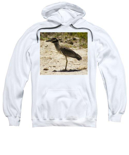 Yellow-crowned Night-heron Sweatshirt