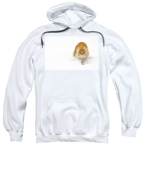 111230p310 Sweatshirt