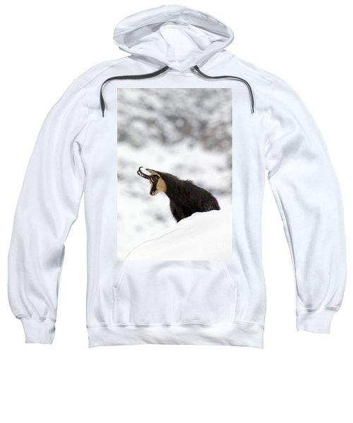 130201p229 Sweatshirt