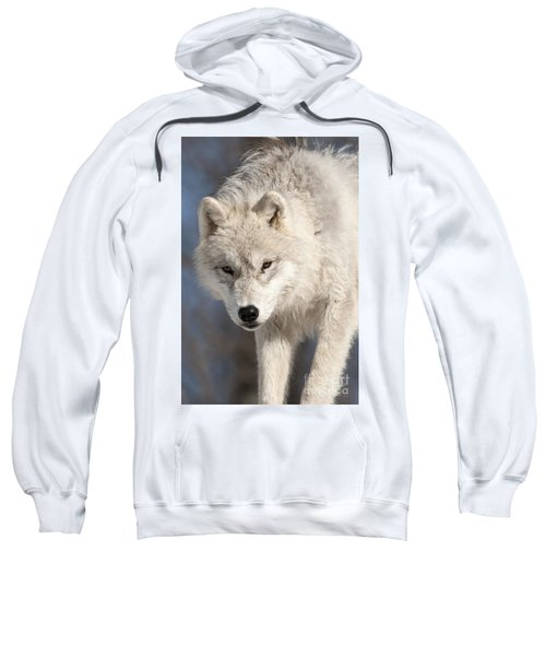 Arctic Wolf Pup Sweatshirt