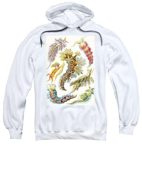 A Collection Of Nudibranchia Sweatshirt