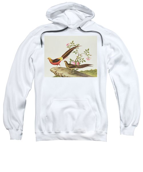 A Golden Pheasant Sweatshirt by Chinese School