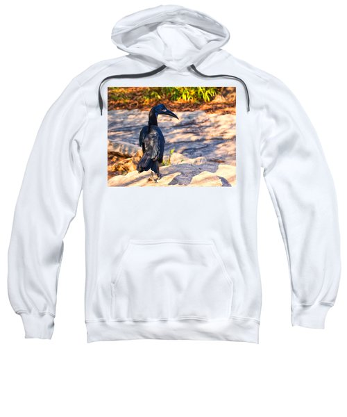 Abyssinian Ground Hornbill Sweatshirt
