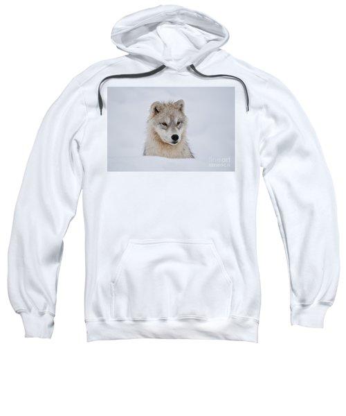 Arctic Pup In Snow Sweatshirt