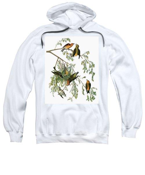 Audubon Crossbill Sweatshirt