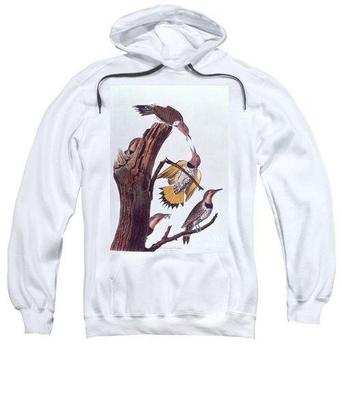 Audubon Golden-winged Woodpeckers Sweatshirt