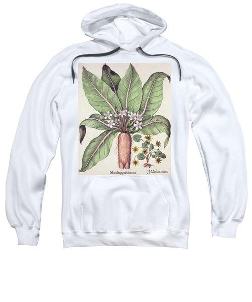 Autumn Mandrake Sweatshirt
