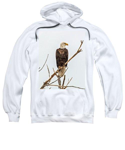 Bald Eagle On A Branch Sweatshirt