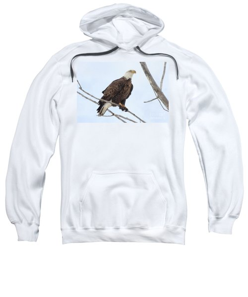 Bald Eagle Sitting On Small Limb Sweatshirt