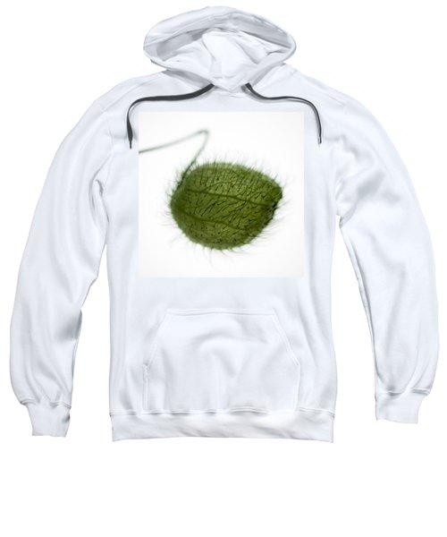Balloon Plant Sweatshirt
