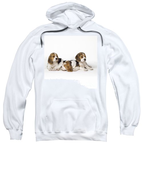 Beagle Puppies, Row Of Three, Second Sweatshirt