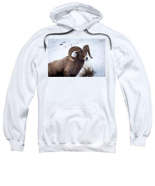 Bighorn Ram Sweatshirt