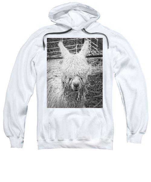 Black And White Alpaca Photograph Sweatshirt by Keith Webber Jr