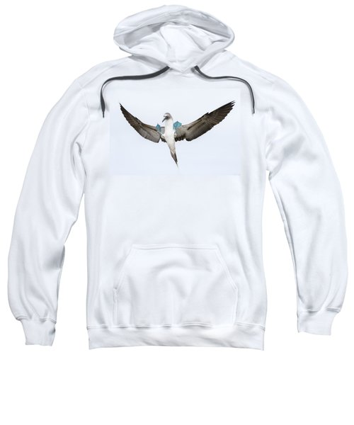 Blue-footed Booby Landing Galapagos Sweatshirt by Tui De Roy