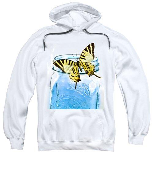 Butterfly On A Blue Jar Sweatshirt