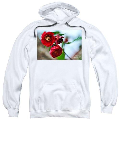 Chinese Lantern - Abutilon Sweatshirt