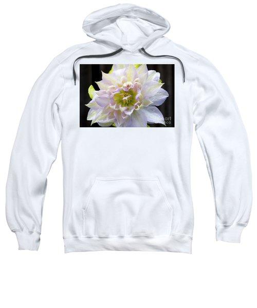Clematis 'belle Of Woking' Sweatshirt