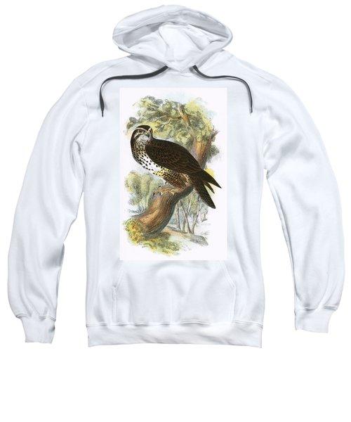 Common Buzzard Sweatshirt by English School