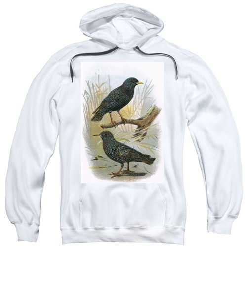 Common Starling Top And Intermediate Starling Bottom Sweatshirt