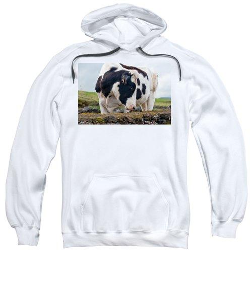 Cow With Head Turned Sweatshirt
