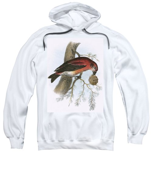 Crossbill Sweatshirt