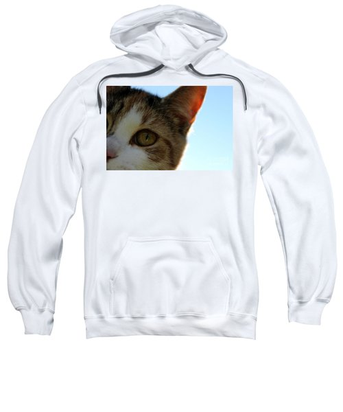 Curious Cat Sweatshirt