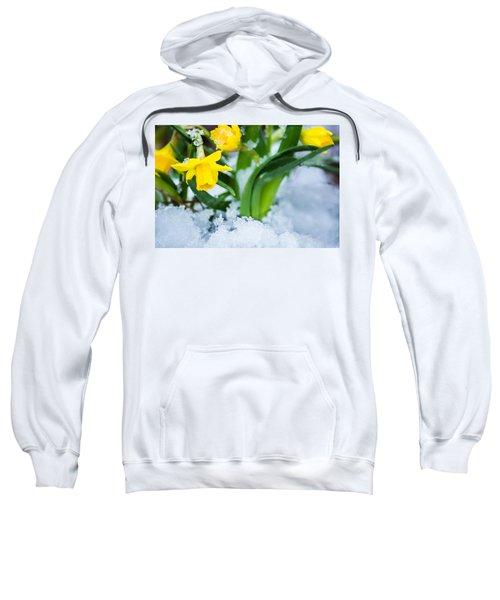 Daffodils In The Snow  Sweatshirt