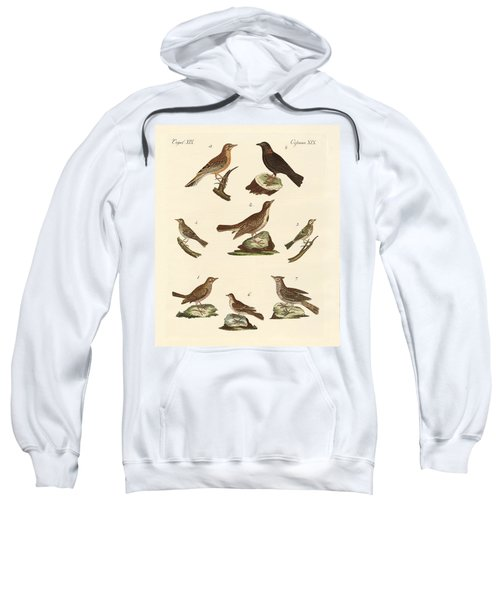 Different Kinds Of Larks Sweatshirt by Splendid Art Prints