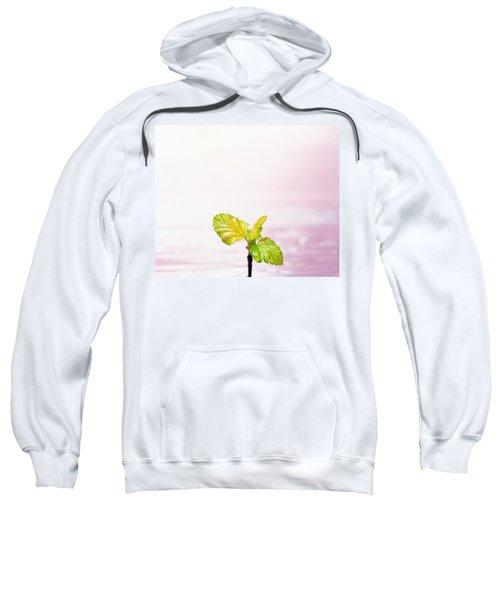 Droplet On Plant Leaf, Close Sweatshirt