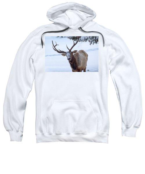 Dumped On Sweatshirt