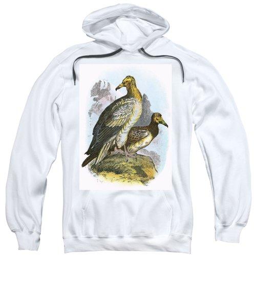 Egyptian Vulture Sweatshirt by English School