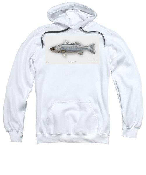 European Seabass Dicentrarchus Labrax - Bar Commun - Loup De Mer - Lubina - Havabor - Seafood Art Sweatshirt